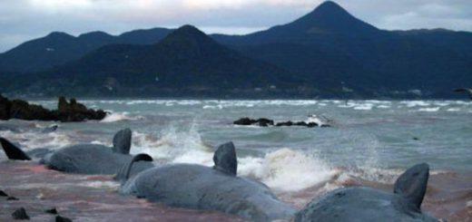 masovo-samoubiijstvo-na-kitove-v-nova-zelandiq-429371