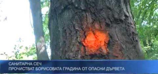 Санитарна сеч – прочистват Борисовата градина от опасни дървета