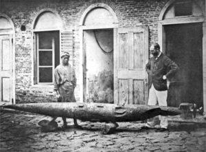 Торпедото на Уайтхед, 1866 г.