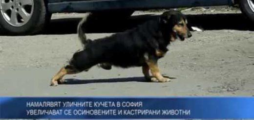 Намалявят уличните кучета в София – увеличават се осиновените и кастрирани животни