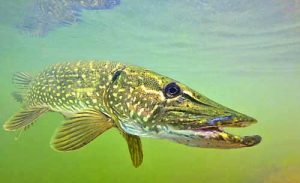 риболов (1)