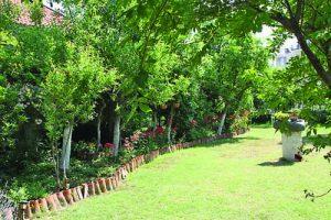 Райската градина