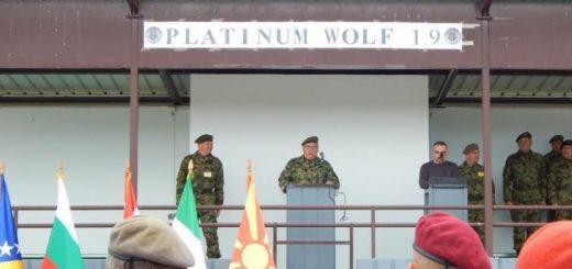 Platinum wolf -2019
