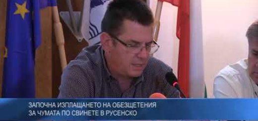 Започна изплащането на обезщетения за чумата по свинете в Русенско