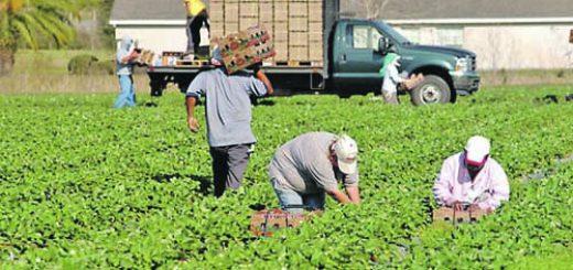 работници ягоди