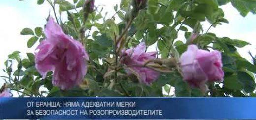 От бранша: Няма адекватни мерки за безопасност на розопроизводителите