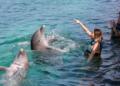 В Гърция ще броят делфините