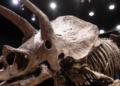 """Частен колекционер купи за 6,65 млн. евро за вкаменелостите на рогатия динозавър """"Големия Джон"""""""